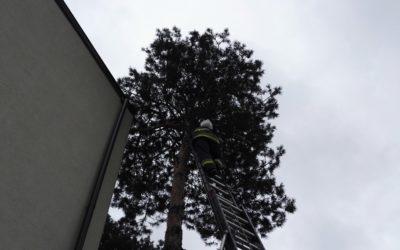 Kot na drzewie – Legionowo